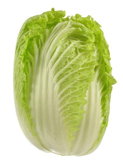 napa cabbage and wong bok kitchen basics harvest to table