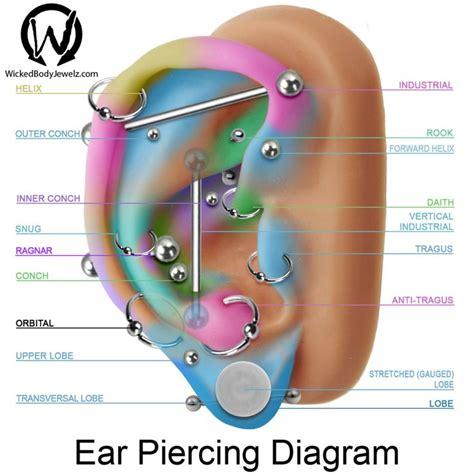 tattoo pain chart behind ear 11 best ear piercings images on pinterest earrings body