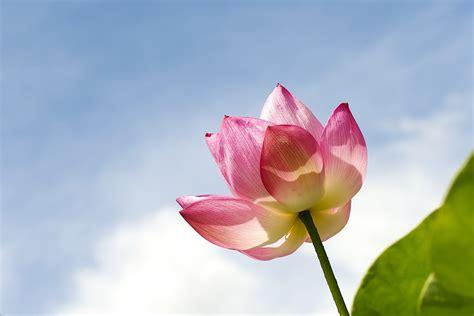 imagenes rosas en hd una hermosa flor rosa hd 1024x683 imagenes wallpapers