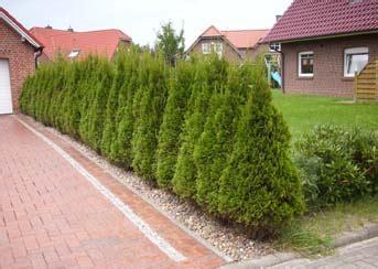 Garten Bepflanzung Am Zaun 5206 by Gartengestaltung Sichtschutz Pflanzen