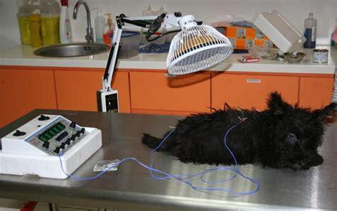 Pada Anjing pengobatan lumpuh pada anjing dan kucing kesehatan