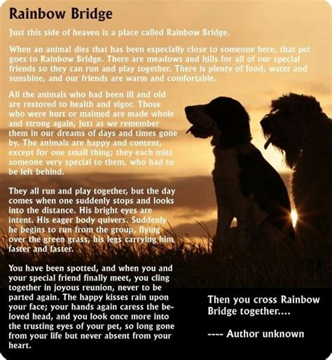 rainbow bridge poem for dogs pet poem breeds picture