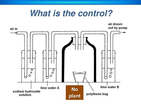 design an experiment to determine if plants respire respiration