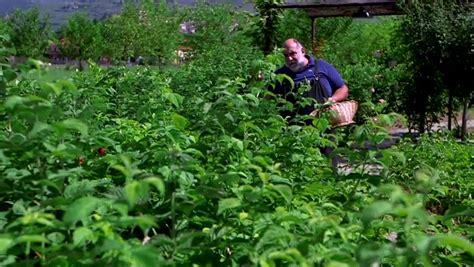 giorgione orto e cucina puntate giorgione orto e cucina puntata 45 in diretta dall orto