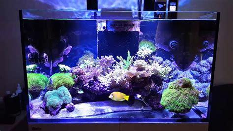 Pompa Hidram Aquarium sea reefer 250 15 months new fish