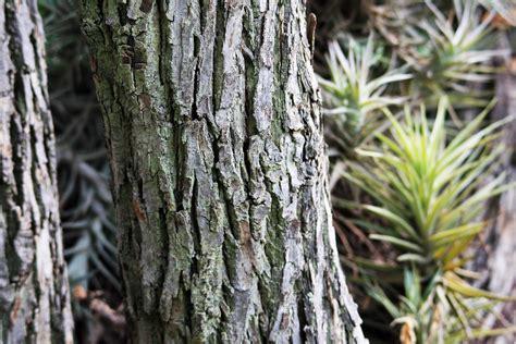 ruff bark bark on tree trunk free stock photo domain pictures