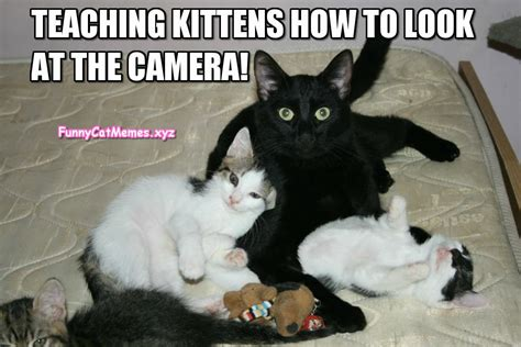 Funny Black Cat Memes - black cats are the best teachers funny cat meme