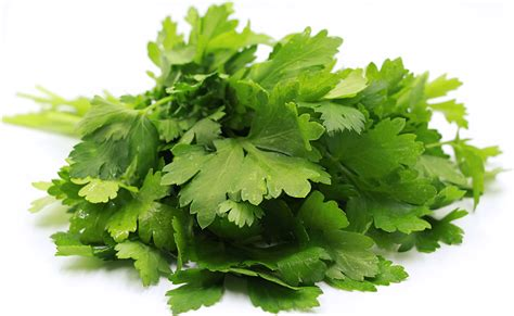italian parsley information recipes and facts