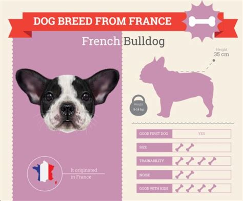 dog breed business template vector 13 vector animal