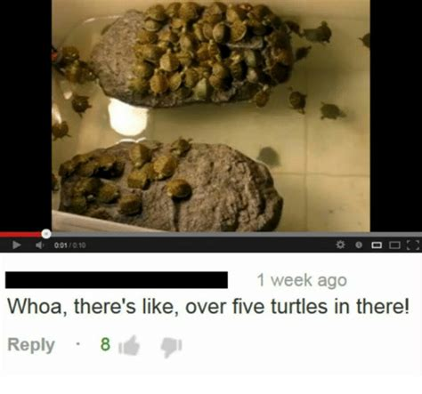 Overeating Meme - 001010 1 week ago whoa there s like over five turtles in