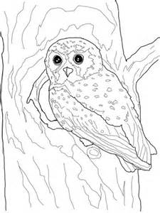 elf owl coloring page supercoloringcom