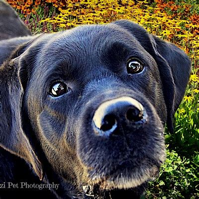 dogs in the gardens photo galleries mcbg inc. 2018