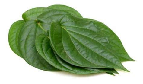 betel leaf betel leaf uses and benefits betel leaf wholesale