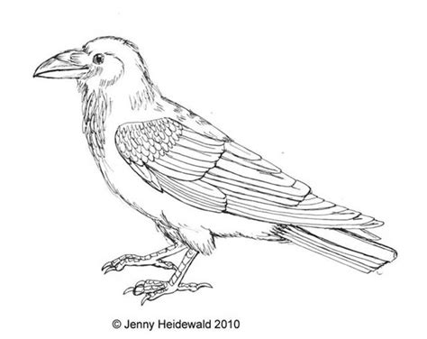 creepy raven coloring pages coloring pages
