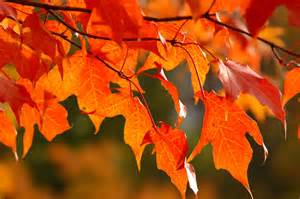 fall colors iowa dnr says fall colors could be average this year