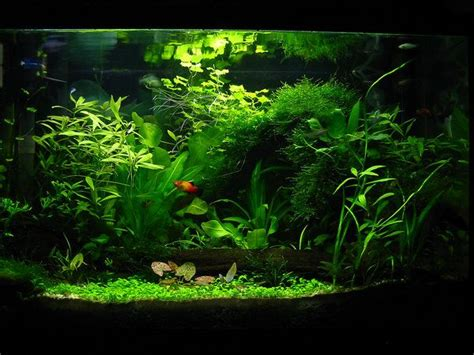 Aquascape Fish by Sunburst S Aquarium Garden By Sunstars Deviantart On