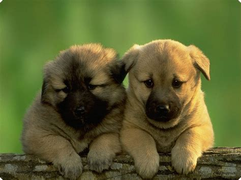 really dogs and puppies really dogs and puppies search pictures photos find of litle pups