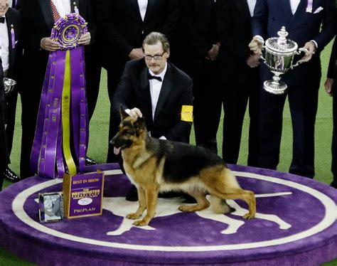 westminster show winner meet the winners of the 141st westminster show heads up by boys