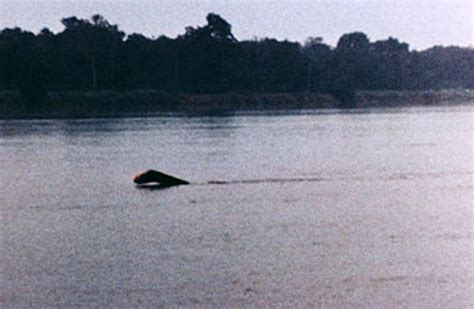 Sighting Of by Amazing Mystery Real Mermaid Sighting On