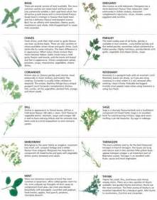 herbs chart fresh herb chart quotes