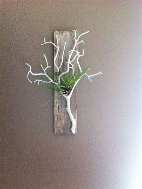 air plant wall holder gray stained barn wood with white branch air plant
