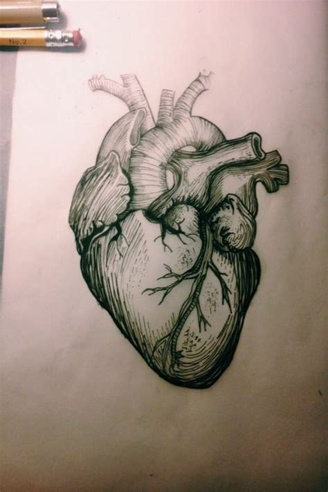 anatomically correct heart tattoo best 25 sketch ideas on sketches of