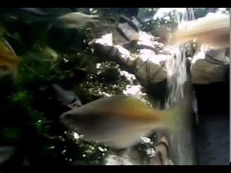 membuat air terjun aquascape youtube air terjun aquascape my favorit youtube