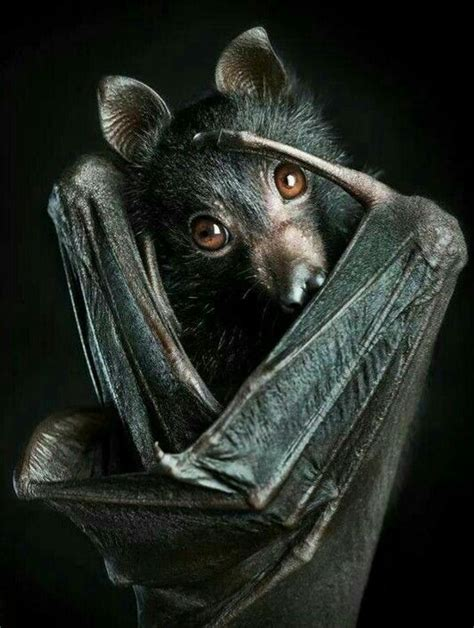vantablack tattoo gallery most species of flying foxes are endangered many