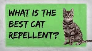 how to make a flea repellent for pets