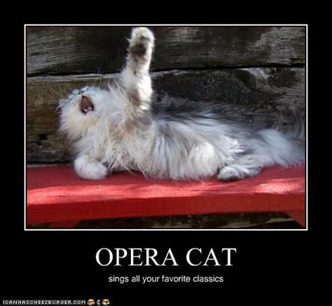 Singing Cat Meme - sunday 8 1 2015 opera day the daily kitten
