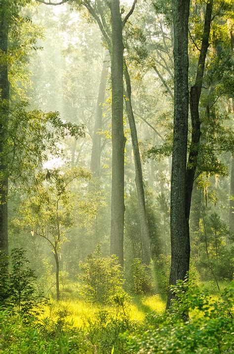 forest glade sunlit forest glade photograph by vanessa kauffmann