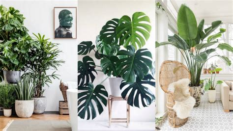 Diy Bathroom Decor Ideas A List Of The Best Indoor Plants For Fabulous Home Decor