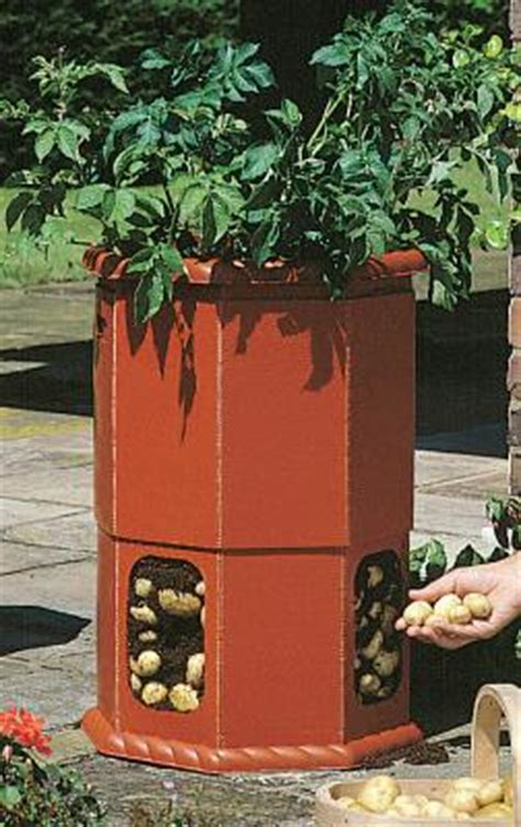 victorian potato barrel hcm  dcm