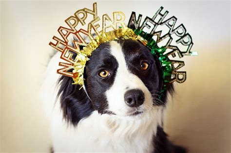 new year for dogs news years pets on happy new year new year s