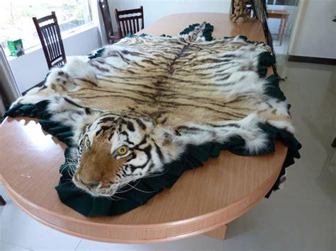 tiger rugs for sale paille et poutre le retour du tigre en europe le d alain sennepin