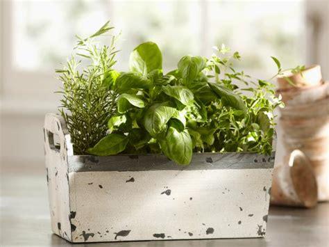Countertop Herb Grower by Indoor Gardening Ideas Tips Techniques Hgtv