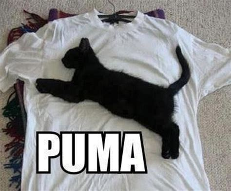 Puma Meme - great cats be funny blog cool cat mazes n memes