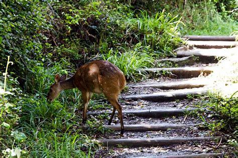Blind River On Een Rode Duiker Op Het Wandelpad Van Het Otter Trail In