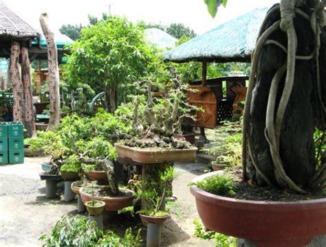 bonsai haus one day at a time sizzling garden bonsai haus