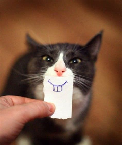 10 Funniest Cat Photos by Cats A Cat Compilation 2016