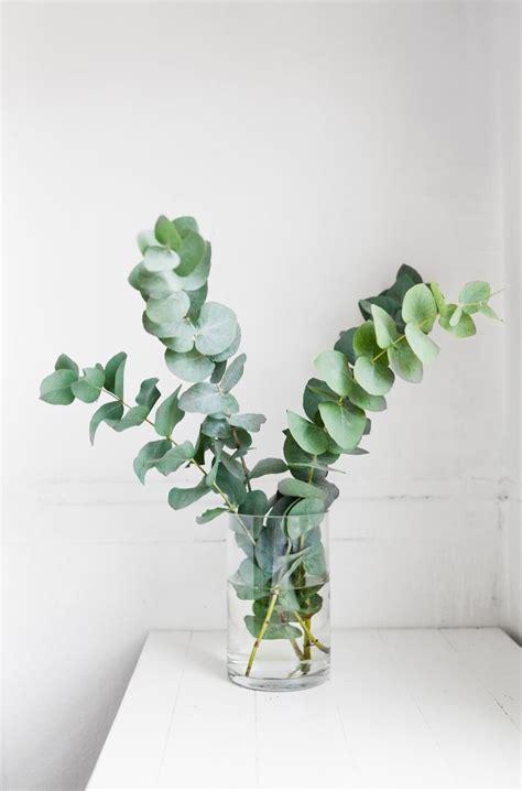 eukalyptus deko 61 besten eukalyptus liebe bilder auf hochzeit