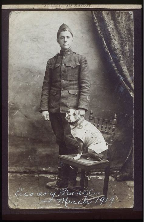 Sergeant Stubby Obituary Schools After The War