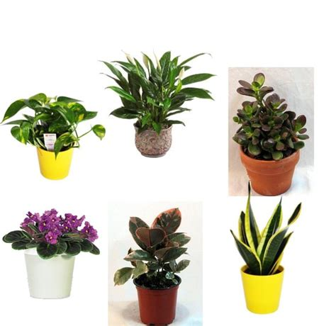Small Plant For Office Desk Best Plants For The Office Popsugar Smart Living