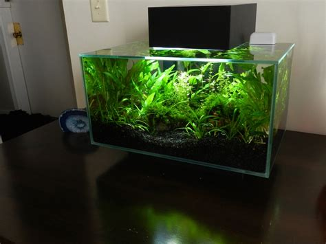 fluval spec aquascape fluval edge inspiration 10 handpicked ideas to discover
