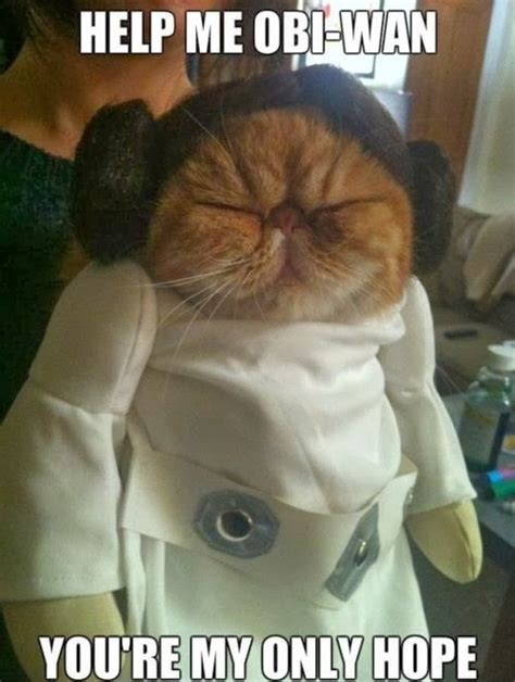 Star Wars Cat Meme - star wars princess leia cat funny joke pictures