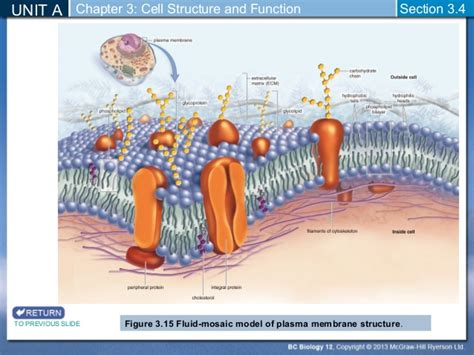 3 proteins in cytoskeleton biology 12 cytoskeleton and cell membrane