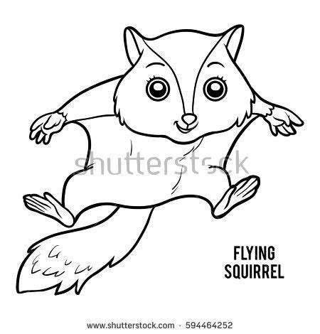 coloring page flying squirrel siberian squirrel stock images royalty free images