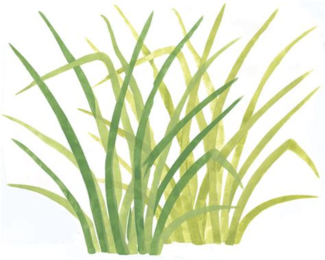 grass template wall mural stencils accent stencils rainforest