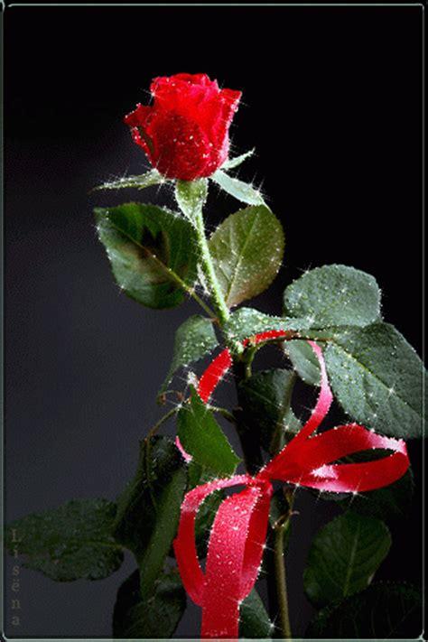 imagenes con movimiento de rosas rojas las mejores imagenes de rosas rojas en movimiento en gif