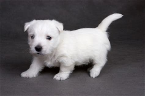 white puppy names amazing white names